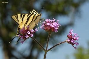 Parcs et jardins dans les Alpes de Haute-Provence : Sentier des papillons