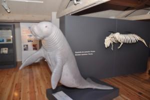 Musée Sirène et fossiles de Castellane