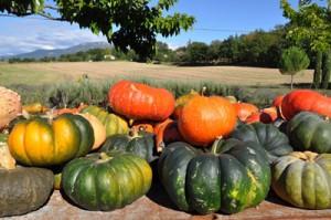 Recette de cuisine du Gratin de Courge dans les Alpes de Haute-Provence
