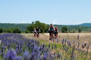 Vélo dans le Pays de Forcalquier Montagne de Lure Luberon