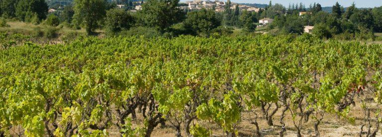 Vignes de Pierrevert ©M. Boutin
