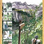 En forêt dans les Alpes de Haute-Provence - Guide de découvertes par les chemins...