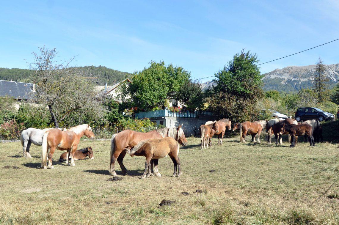 Concours Mulassier mules mulets