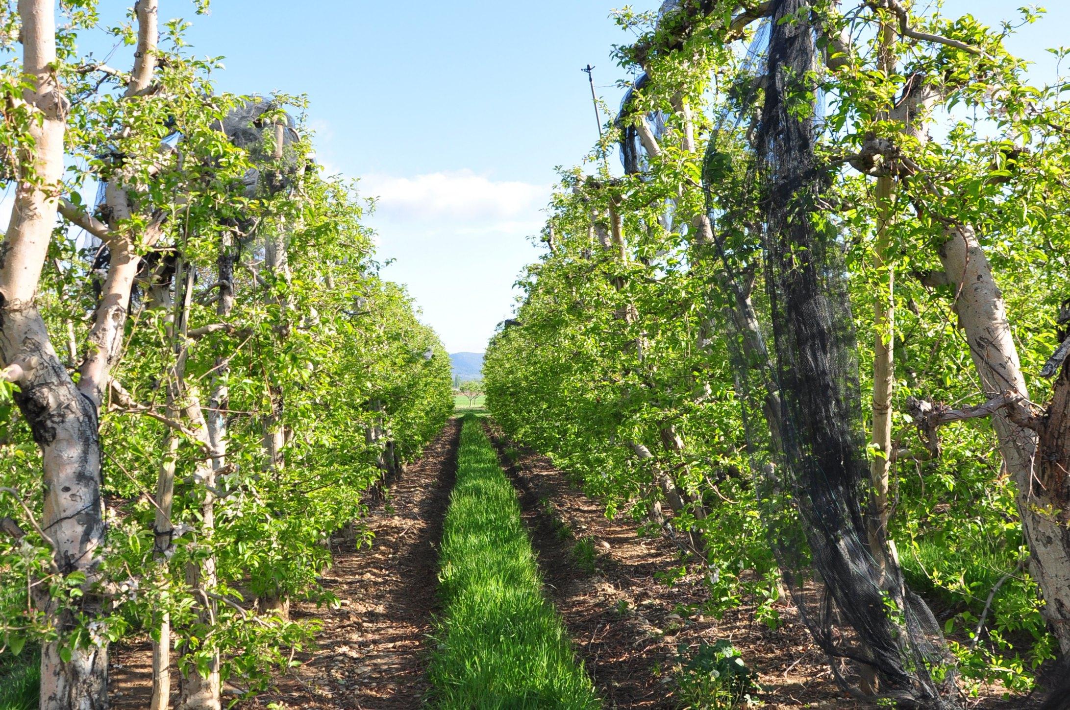 Pommes alpes de haute durance alpes de haute provence - Office tourisme montgenevre hautes alpes ...