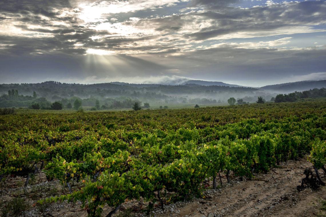 Vignoble de Pierrevert ©AD04-François-Xavier Emery