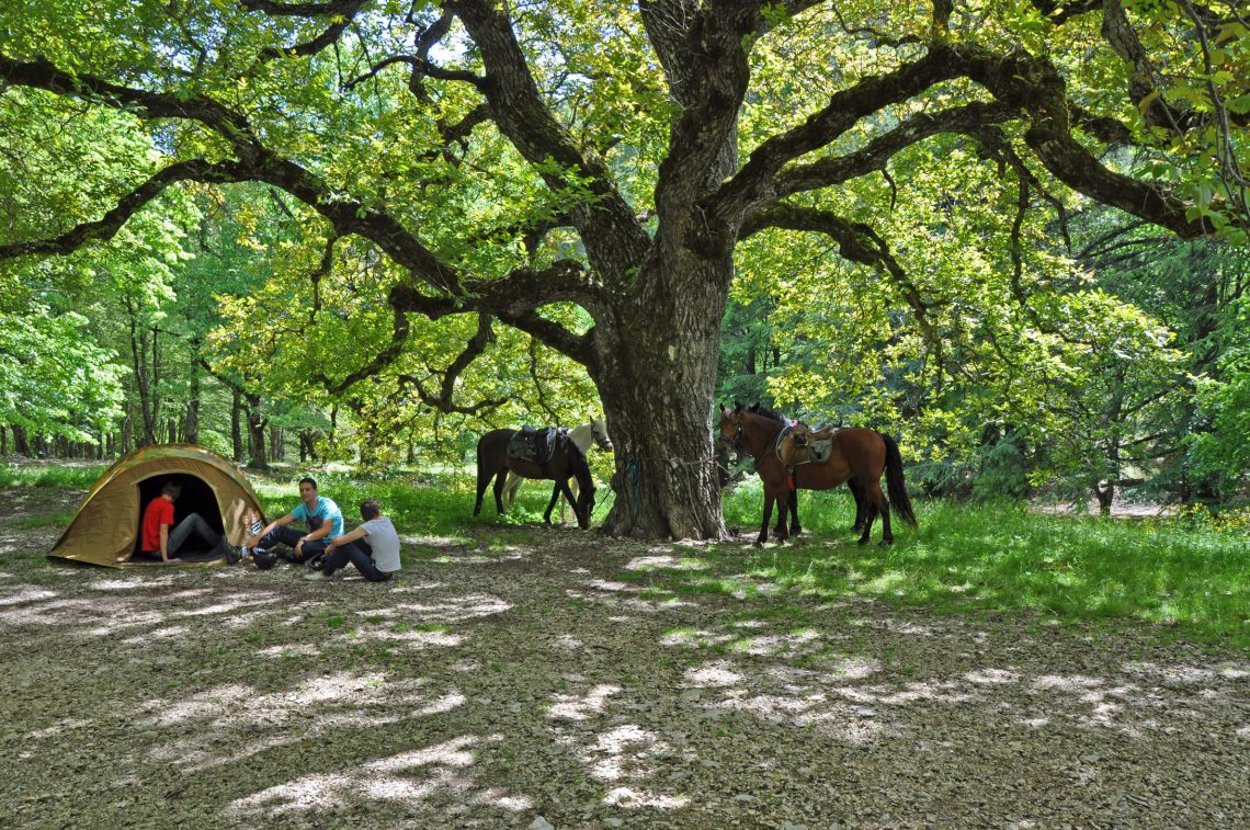 Chevauchées en Haute-Provence Luberon
