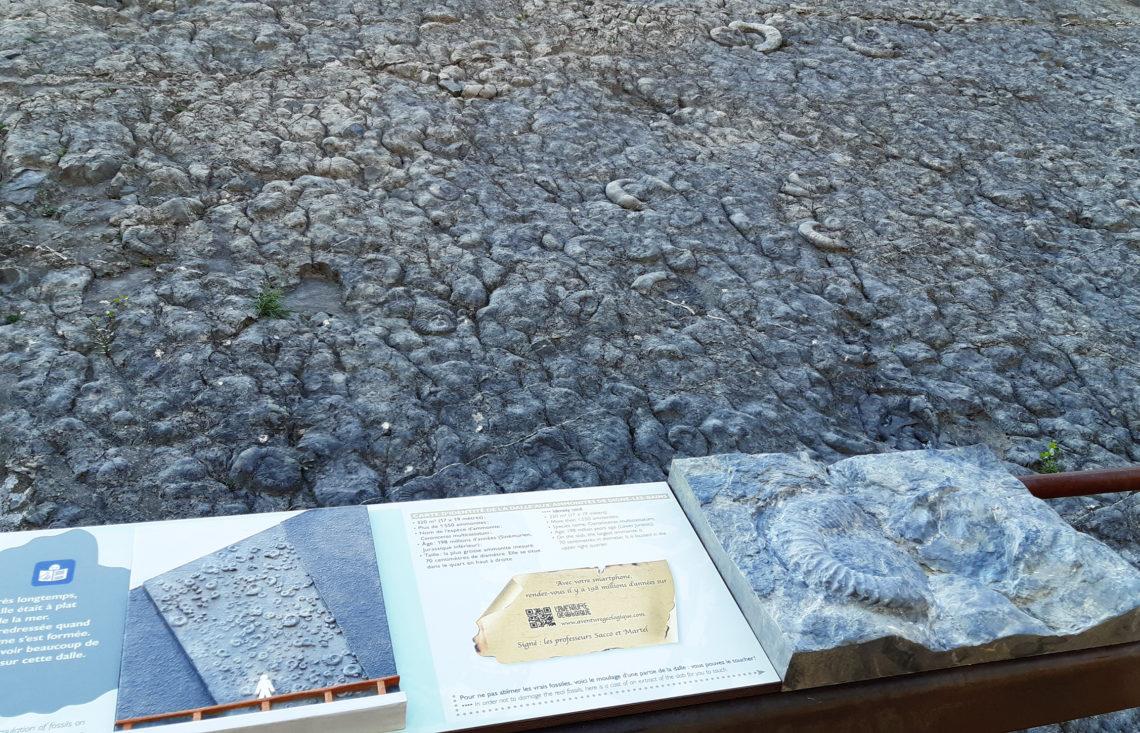La dalle aux ammonites de Digne-les-Bains ©CD Alpes de Haute Provence