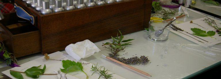 Atelier de découverte des plantes UESS