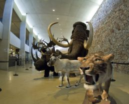 Musée de préhistoire des gorges du Verdon à Quinson
