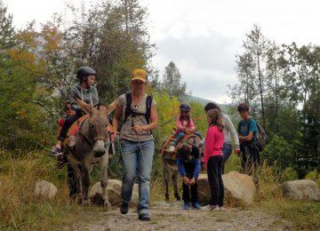 Randonnée avec âne de bat animaux