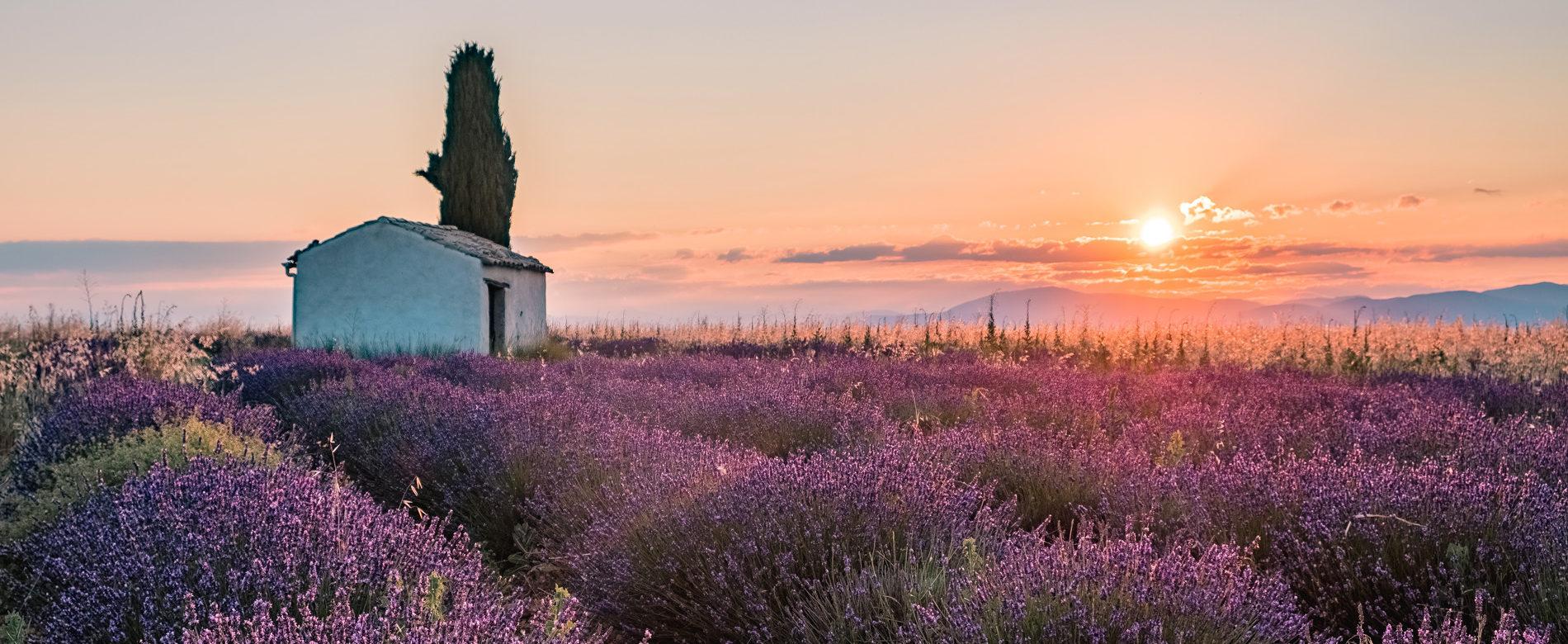 Champ de lavande plateau de Valensole ©Teddy Verneuil