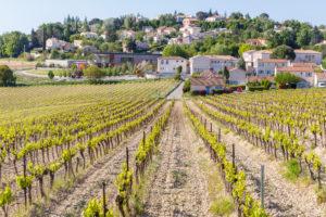 Vigne Pierrevert ©AD04-Loic Lagarde