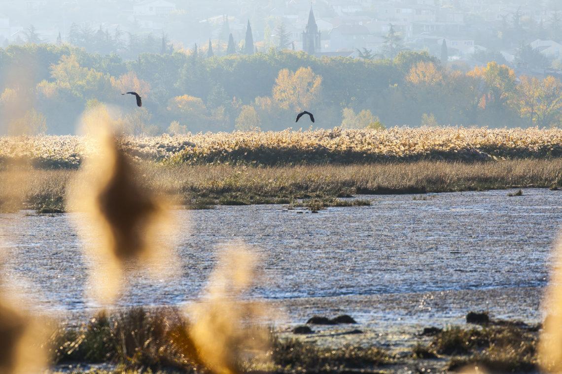 Réserve ornithologique de l'Escale ©AD04-Thibaut Vergoz